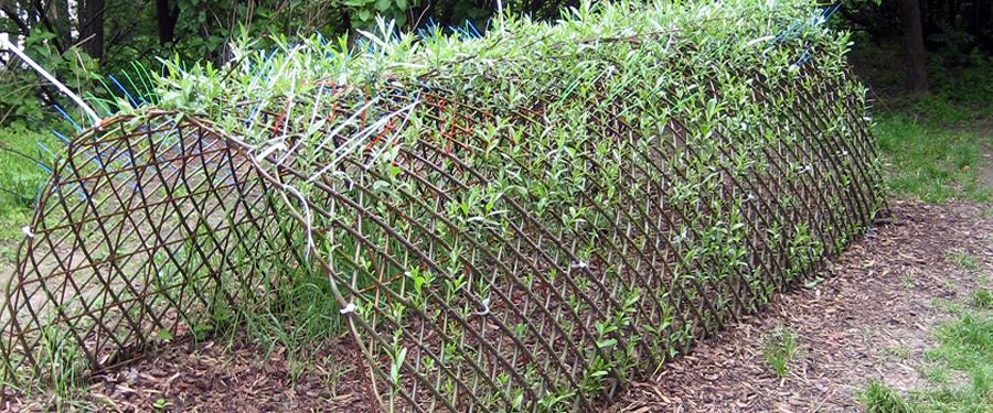 Gartengestaltung Rosenauer Scheibbs Weidenbau Dekoration